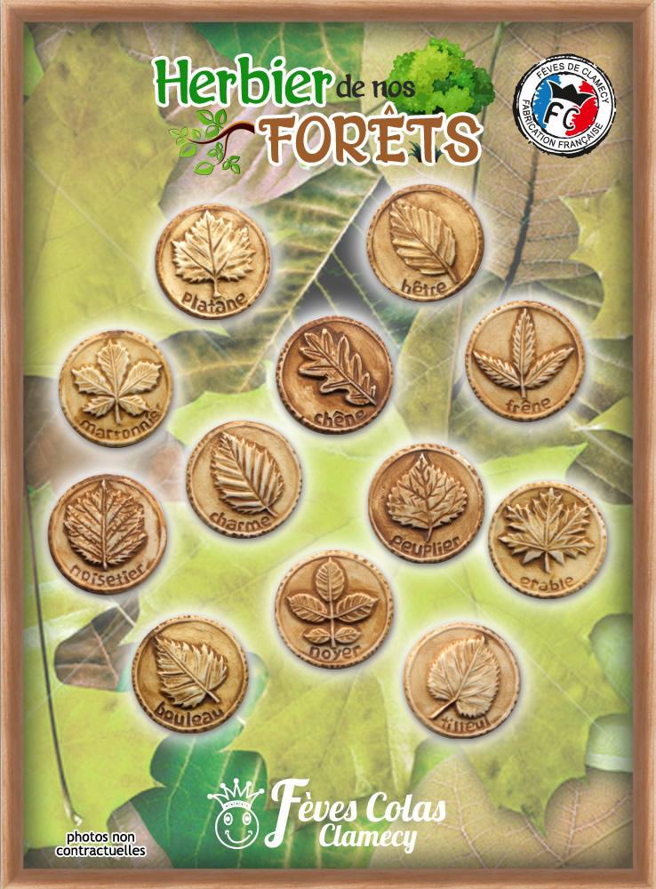Herbier de Nos Forêts